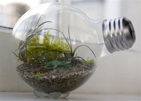 Light Bulb Terrarium by Creative Terrarium Containers Make A Terrarium