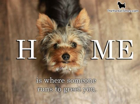 house a yorkie tips where your home is
