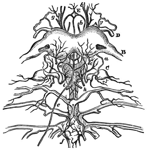 Free Coloring Pages Of Nervous System Nervous System Coloring Pages