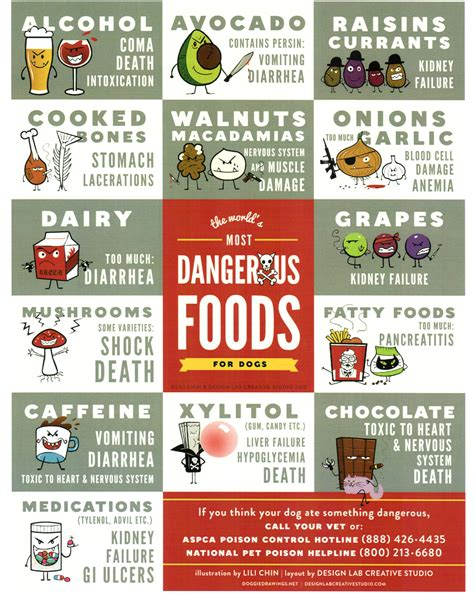 what foods are toxic to dogs common foods that are poisonous to dogs
