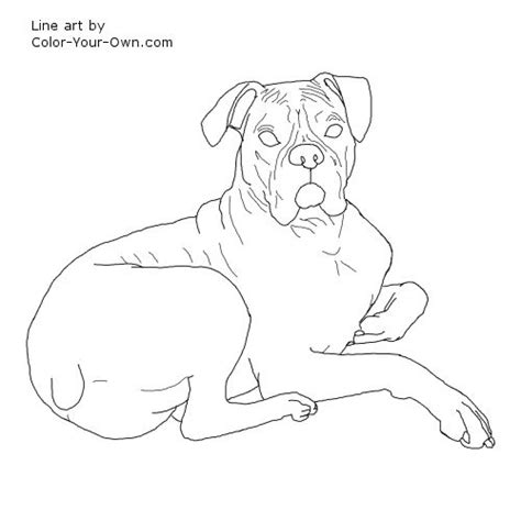 drawing boxer dog colouring pages
