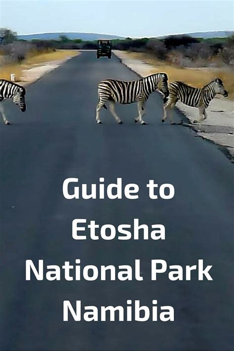 access all areas a real world guide to gigging and touring books guide to etosha national park namibia