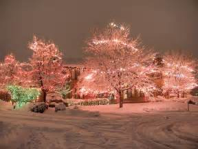 Pretty Outdoor Lights Pastel Pink Lights Decorate Outdoor Trees Decorated