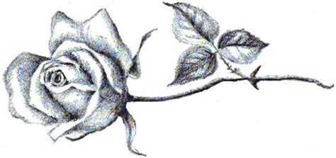 rose tattoo tutorial best 20 single tattoos ideas on