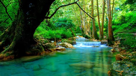 forest river  cascades turquoise water rocks trees