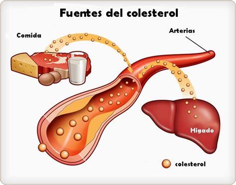 alimenti con alto contenuto di colesterolo dieta per il colesterolo cosa mangiare e cosa evitare
