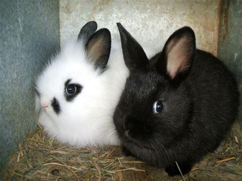 sheep spinach  strawberries baby bunnies