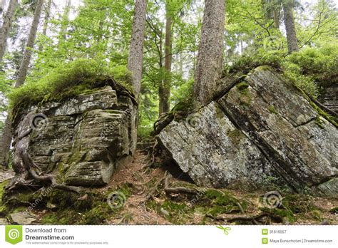 bid in big rocks and forest at the arbersee germany royalty free