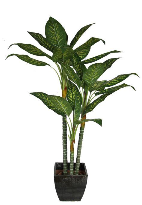 house plant house plant png