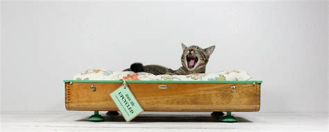 upcycled cat bed upcycled vintage wooden suitcase pet bed by atomicattic on