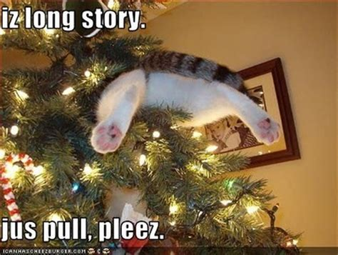 cat on top of christmas tree meme some screaming fangirl tis the season and all that stuff and lolcatz