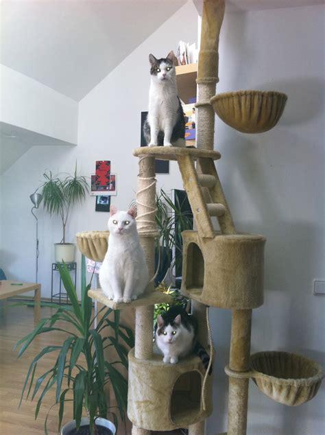 wo kann hã ngematten kaufen wohnung streichen mit katzen speyeder net verschiedene