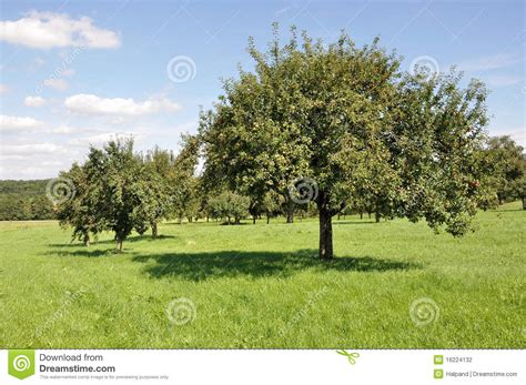 fields for growing fruit trees fruit trees in field 1 baden stock photography image