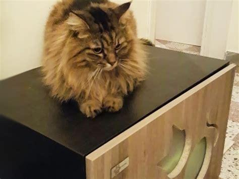 cassetta gatto autopulente lettiera per gatto la migliore lettiera per gatto