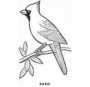 Cardinal Stencil Template Kentucky Art Lessons