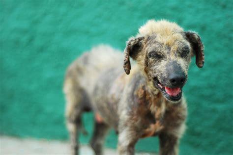 rabid puppies top 10 tropical diseases to beware