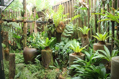 garden tips fern plants interior design inspiration