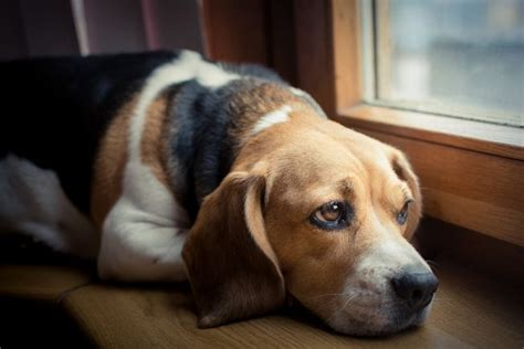 is my puppy depressed is my depressed the warning signs and solutions mnn nature network