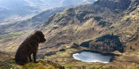 Cottages To Rent In Lake District With Dogs by Pet Friendly Cottages In The Lake District Book Your