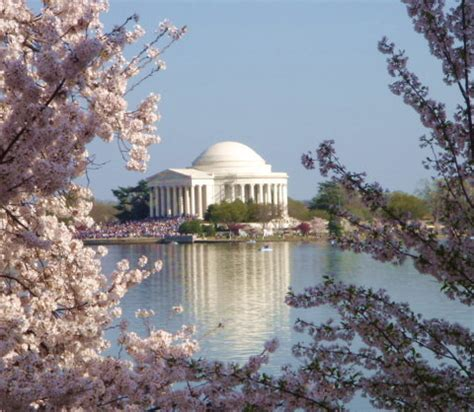 taking engagements photos near the washington dc cherry blossoms howerton wooten events