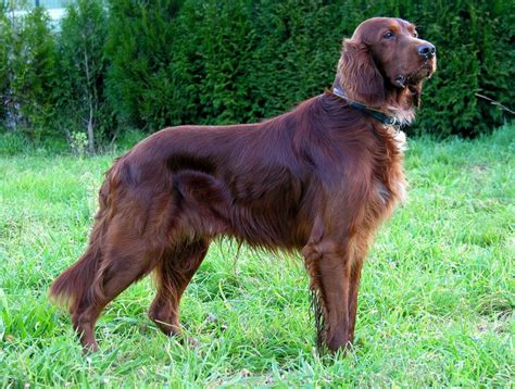 best family dogs large best family breeds large pet photos gallery 5nbqm40bvx