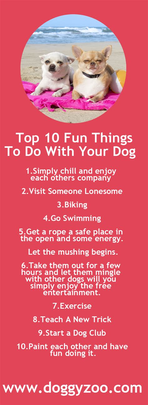 things to do with dogs top 10 things to do with your doggyzoo comdoggyzoo