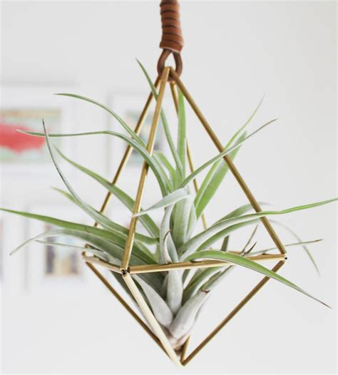hanging air plant himmeli diamond air plant ornament from scoutmob things