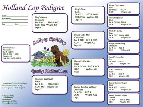 template packaging lop custom rabbit pedigree designs holland lops pinterest