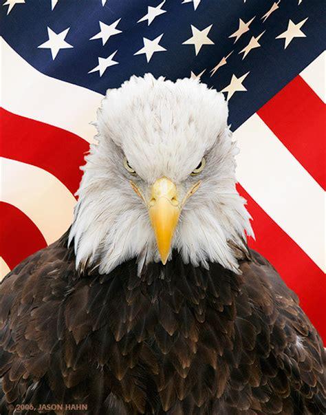 the bald eagle american symbols obama changes u s national symbol fellowship of the minds