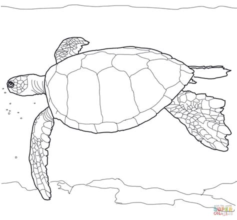 Sea Turtles Coloring Pages Hawaiian Green Sea Turtle Coloring Page Free Printable by Sea Turtles Coloring Pages