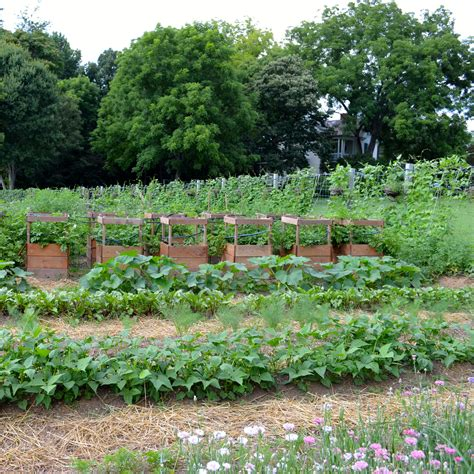 A Beautiful Vegetable Garden After Orange County Beautiful Vegetable Garden Pictures
