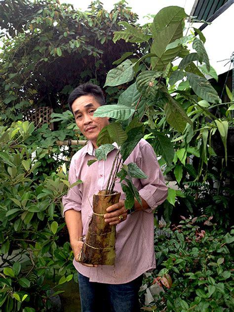Bibit Duku Palembang melestarikan duku palembang upaya menjaga lahan gambut