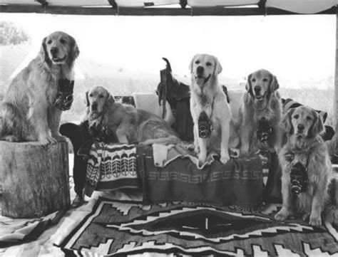 bruce weber golden retrievers 17 best images about you re golden on happy cers puppys and labradors