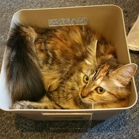 why cats are liquids the meta picture cats are liquid cute cats hq pictures of cute cats