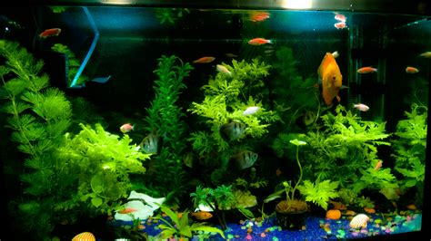 aquascape pictures cichlids com aquascape