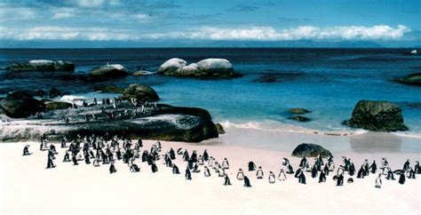 Boulders Beach: pingüinos en África