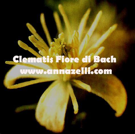 clematis fiore di bach fiori di bach mappa argomenti home page floriterapia