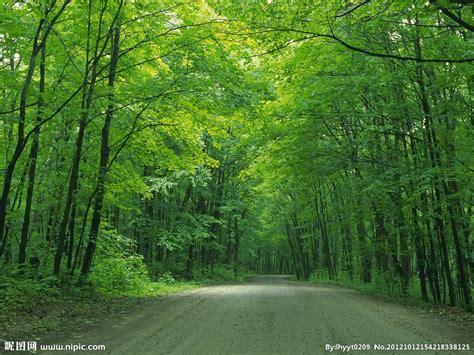 some pic 绿色森林摄影图 自然风景 自然景观 摄影图库 昵图网nipic