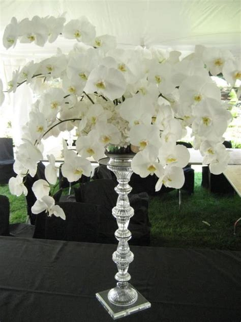 Phalaenopsis Orchid Centerpiece Planning Our 17 Best Images About Orchid Tablescapes On