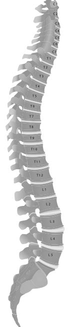 Lp Support Cervical Collar Soft Uk L Lp 906 200000349 about the spine serious llp