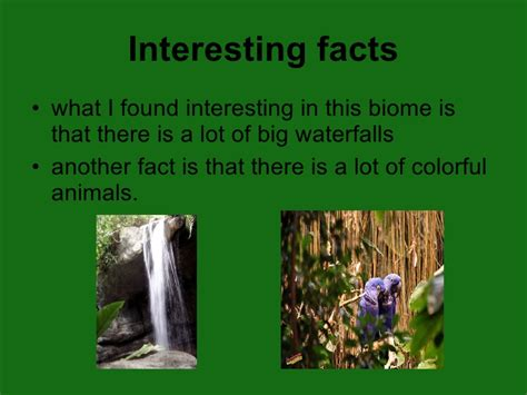 10 Facts About The Forest Floor by Tropical Forest