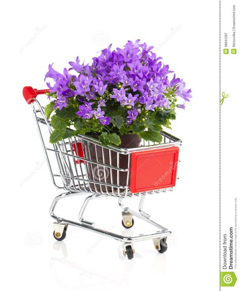 Crt Bag Flower blue canula flowers in a shopping cart stock photo