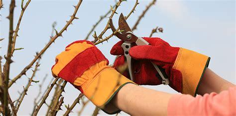 wann sträucher schneiden herbst schneiden im herbst oder im fr 252 hjahr