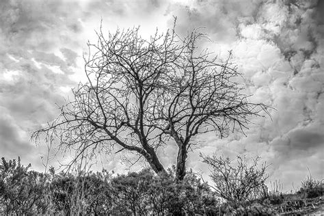 fotos de naturaleza en blanco y negro blog de fotograf 237 a naturaleza muerta