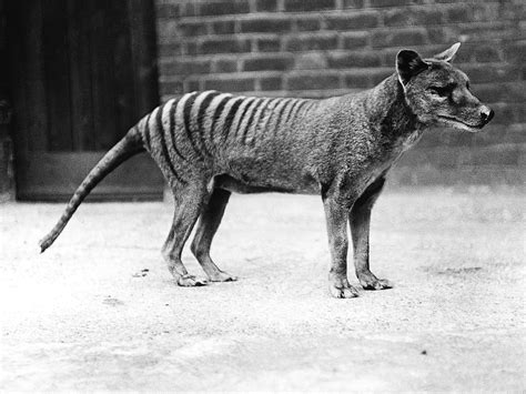 extinct breeds 301 moved permanently