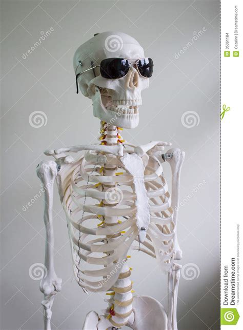Wears Really Cool by Skeleton With Sunglasses Stock Images Image 35361184
