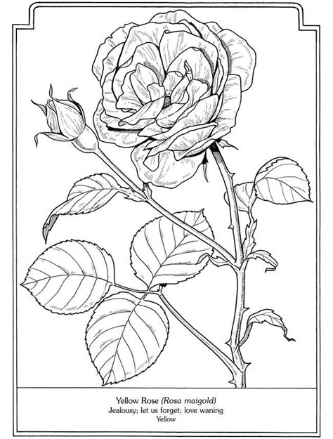 dover coloring books for sale 308 best color plants images on coloring books