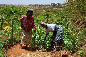 agriculture in kenya wikipedia