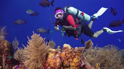 roatan dive dive anthony s key roatan honduras bay islands