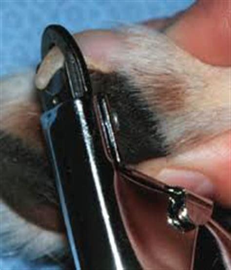 nail bleeding won t stop animal radio r show 670 october 6 2012